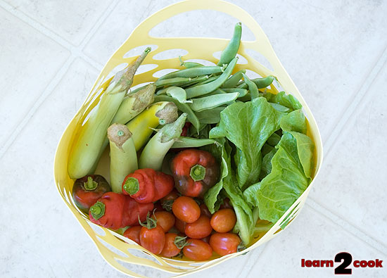 picking tomatoes is like fishing How to pick healthy tomato plants be sure to pick out healthy plants with no yellowing or speckling on the leaves (fusarium or leaf spot)  tomatoes like.