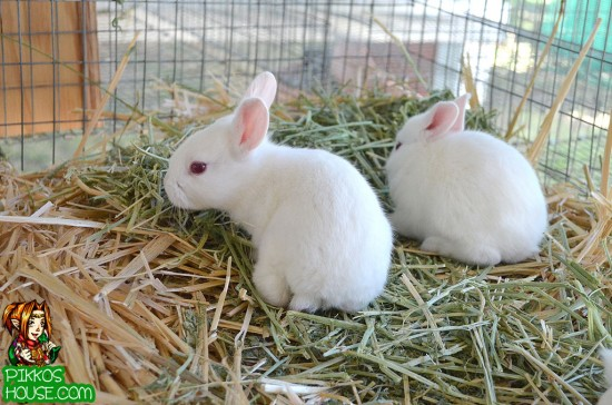 Bunnies on their straw bed