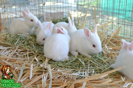 Bunnies on Straw