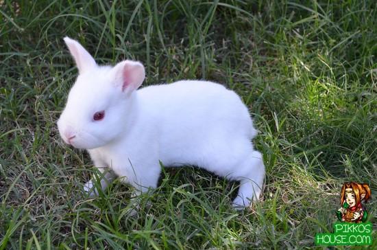 Baby Bunny Exploring