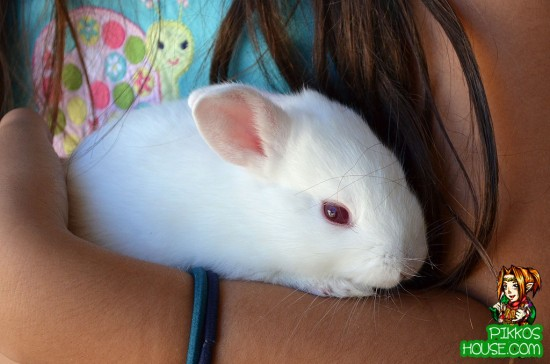Bunny or guinea pig?