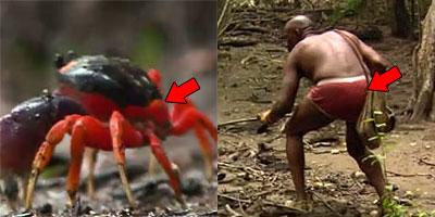 Phillip Crab