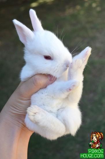 Karate Bunny 2