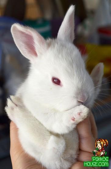 Karate Bunny!