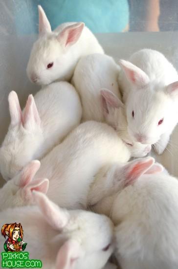 Batch of Bunnies